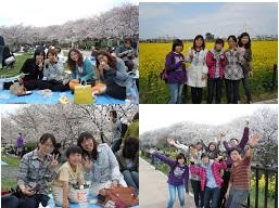 Yono_02ohanami