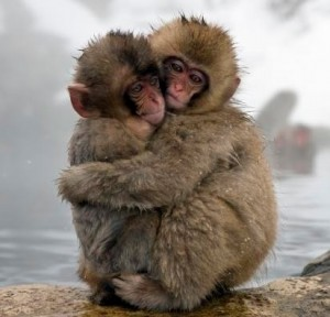 it-s-year-of-the-monkey-in-japan