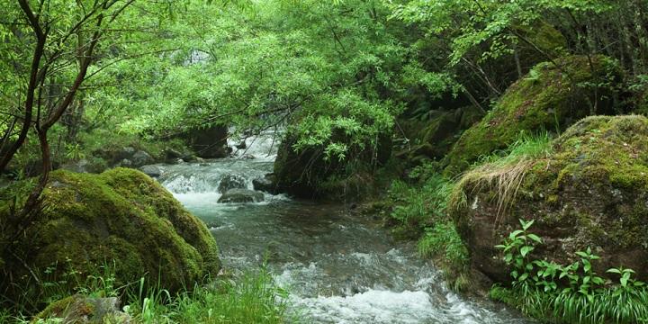 Japanese-countryside